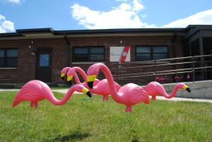 MWR Admin Building flamingos